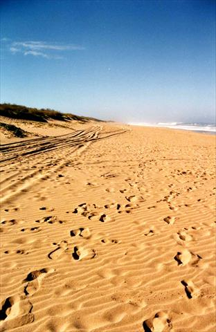 Footprints along the beach