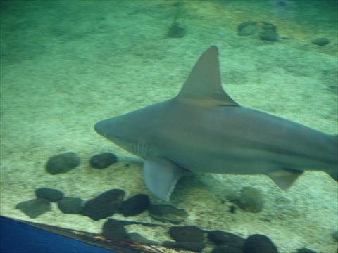 Shark- behind glass !